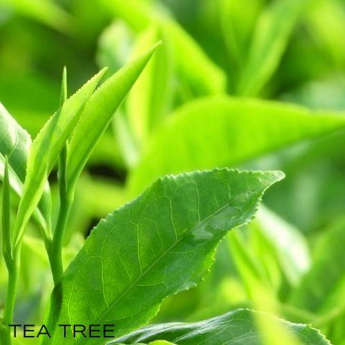 Olio essenziale Tea Tree puro