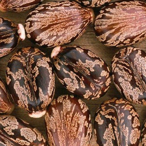 Olio di Ricino rinforzante ed elasticizzante La Saponaria